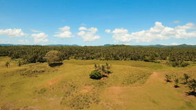 Vista aérea de un campo del arroz Filipinas, Siargao almacen de metraje de vídeo