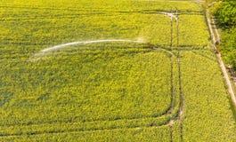 Vista aérea de un campo floreciente amarillo con la violación y un sistema de rociadores para la irrigación del campo Imágenes de archivo libres de regalías