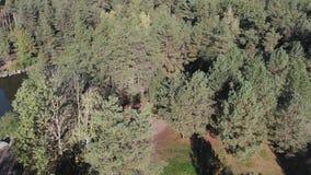Vista aérea de un lago del bosque con rocas y un embarcadero de madera, almacen de video