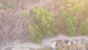 Vista aérea de un lago en un bosque del pino con una playa arenosa en primavera temprana en la salida del sol almacen de metraje de vídeo