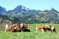 Vista aérea de un pueblo suizo del país. Fotos de archivo