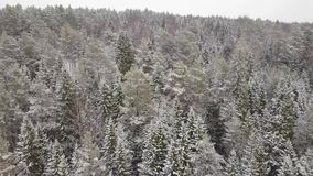 Vista aérea de una rama de árbol Nevado de maderas del invierno en una vista del bosque del invierno almacen de metraje de vídeo