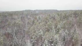 Vista aérea de una rama de árbol Nevado de maderas del invierno en una vista del bosque del invierno almacen de video