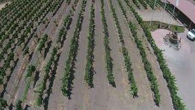 Vista aérea de viñedos en California metrajes