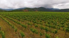 A vista aérea de vinhedo surpreendente enfileira em Geórgia, agricultura, negócio de cultivo video estoque
