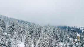 Vista aérea del árbol de navidad nevado en montañas Imagen de archivo libre de regalías