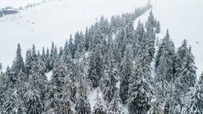Vista aérea del árbol de navidad nevado en montañas Fotografía de archivo libre de regalías