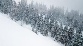 Vista aérea del árbol de navidad nevado en montañas Fotos de archivo