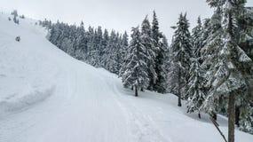Vista aérea del árbol de navidad nevado en montañas con el camino Imágenes de archivo libres de regalías