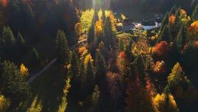 Vista aérea del bosque