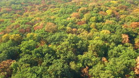 Vista aérea del bosque colorido del otoño en las colinas almacen de video