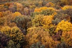 Vista aérea del bosque colorido imponente de la caída del otoño Fotografía de archivo