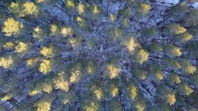 Vista aérea del bosque congelado invierno cubierto en nieve almacen de metraje de vídeo