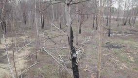 Vista aérea del bosque después de un fuego almacen de metraje de vídeo
