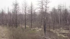 Vista aérea del bosque después de un fuego almacen de video