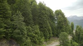 Vista aérea del bosque en cuesta de montaña almacen de metraje de vídeo
