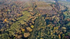 Vista aérea del bosque en otoño Imagen de archivo