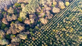 Vista aérea del bosque en otoño Fotografía de archivo