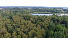 Vista aérea del bosque en Polonia almacen de video