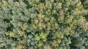 Vista aérea del bosque en Polonia metrajes