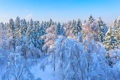 Vista aérea del bosque del invierno Imagenes de archivo