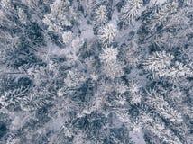Vista aérea del bosque del invierno cubierta en nieve y helada Imagenes de archivo