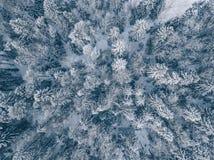 Vista aérea del bosque del invierno cubierta en nieve y helada Fotografía de archivo libre de regalías