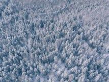 Vista aérea del bosque del invierno cubierta en nieve y helada Imagen de archivo