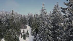 Vista aérea del bosque nevoso almacen de video