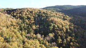 Vista aérea del bosque otoñal en montañas pirenáicas, Francia metrajes