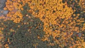 Vista aérea del bosque del otoño en la reserva de naturaleza siberiana Stolby metrajes
