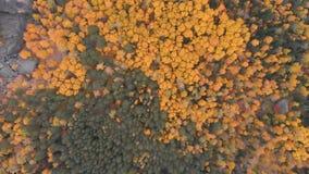 Vista aérea del bosque del otoño en la reserva de naturaleza siberiana Stolby almacen de video