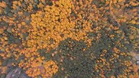 Vista aérea del bosque del otoño en la reserva de naturaleza siberiana Stolby almacen de metraje de vídeo