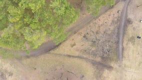Vista aérea del bosque pino-de hojas caducas en primavera temprana almacen de video