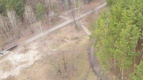 Vista aérea del bosque pino-de hojas caducas en primavera temprana