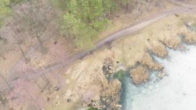 Vista aérea del bosque pino-de hojas caducas en primavera temprana almacen de metraje de vídeo