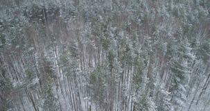 Vista aérea del bosque del pino en un día de invierno Foto de archivo