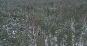 Vista aérea del bosque del pino en un día de invierno Imagenes de archivo