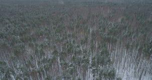 Vista aérea del bosque del pino en un día de invierno Imagen de archivo