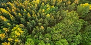 Vista aérea del bosque spruce Imágenes de archivo libres de regalías