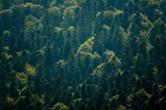 Vista aérea del bosque verde Foto de archivo