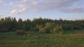 Vista aérea del bosque verde con diversos árboles, campo de hierba contra el cielo azul en luz del día almacen de video