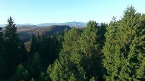 Vista aérea del bosque verde, preservación de la fauna almacen de metraje de vídeo