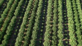 Vista aérea del campo almacen de video