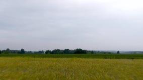 Vista aérea del campo metrajes