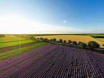 Vista aérea del campo del levender foco hacia números más inferiores y medios GoPro, tiro de la puesta del sol Foto de archivo