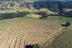 Vista aérea del campo rural de la escena y de la agricultura foto de archivo