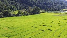 Vista aérea del campo verde de la terraza del arroz en Chiang Mai, Tailandia Fotos de archivo libres de regalías