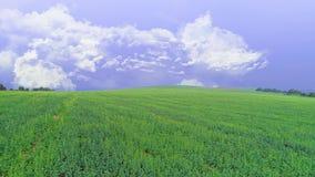 Vista aérea del campo verde vivo Cielo de la lavanda con las nubes blancas mullidas Copie el espacio 4K metrajes