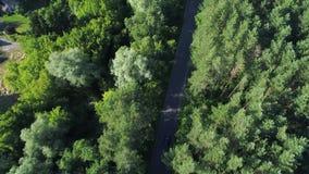 Vista aérea del coche deportivo que conduce en bosque almacen de metraje de vídeo